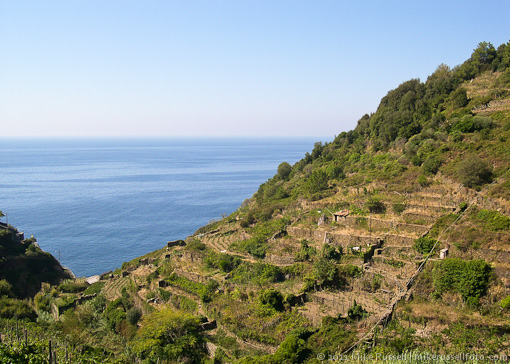 view of vineyards from trail between Vernazza and Corniglia in 2003