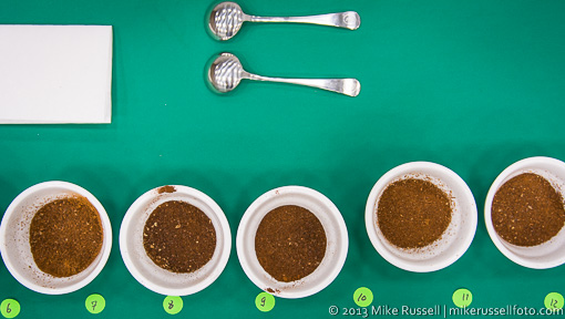 Line of dry ground coffee in sample cups with two spoons